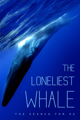 The Loneliest Whale: Searching For 52